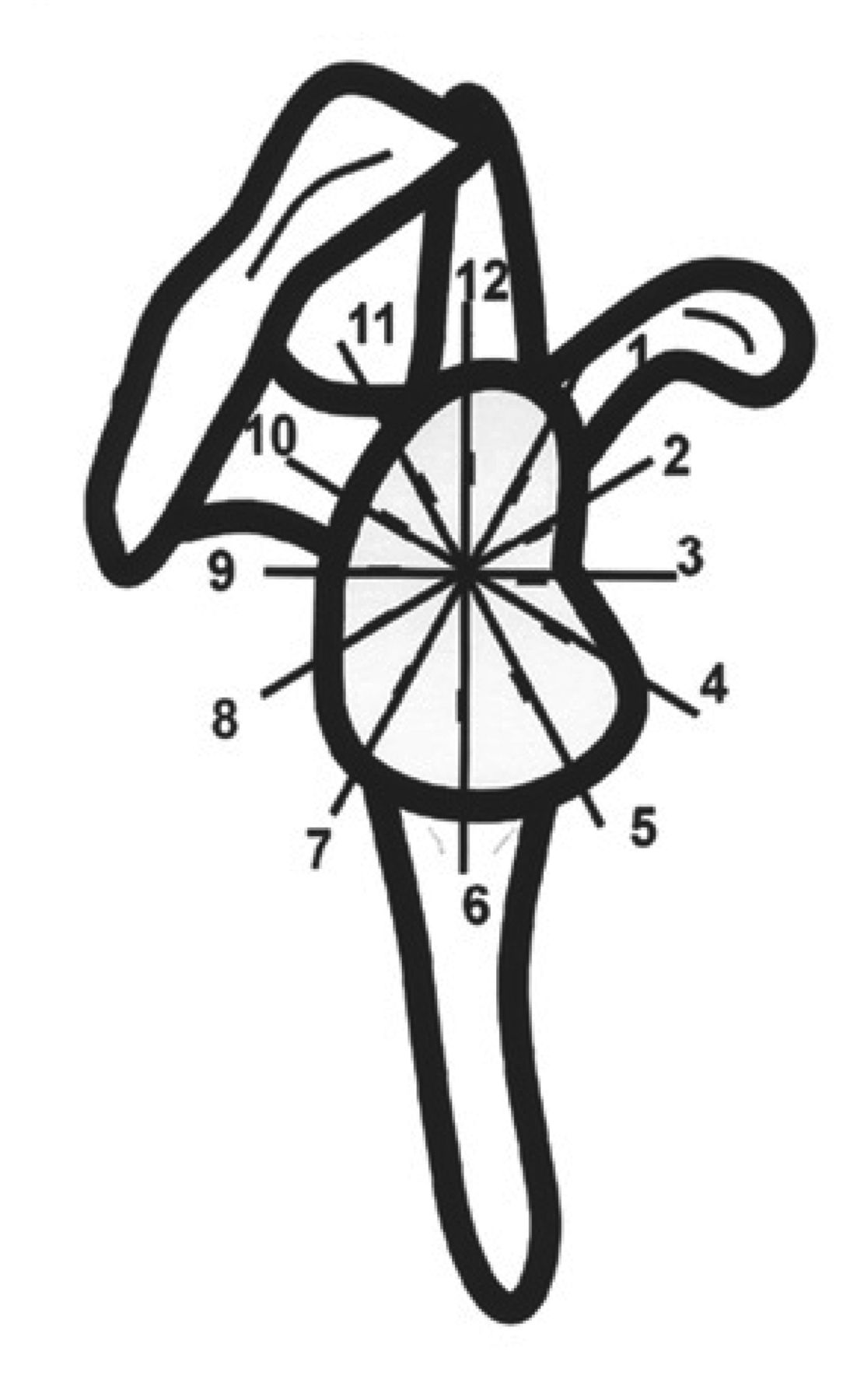 Image Result For Time Zones